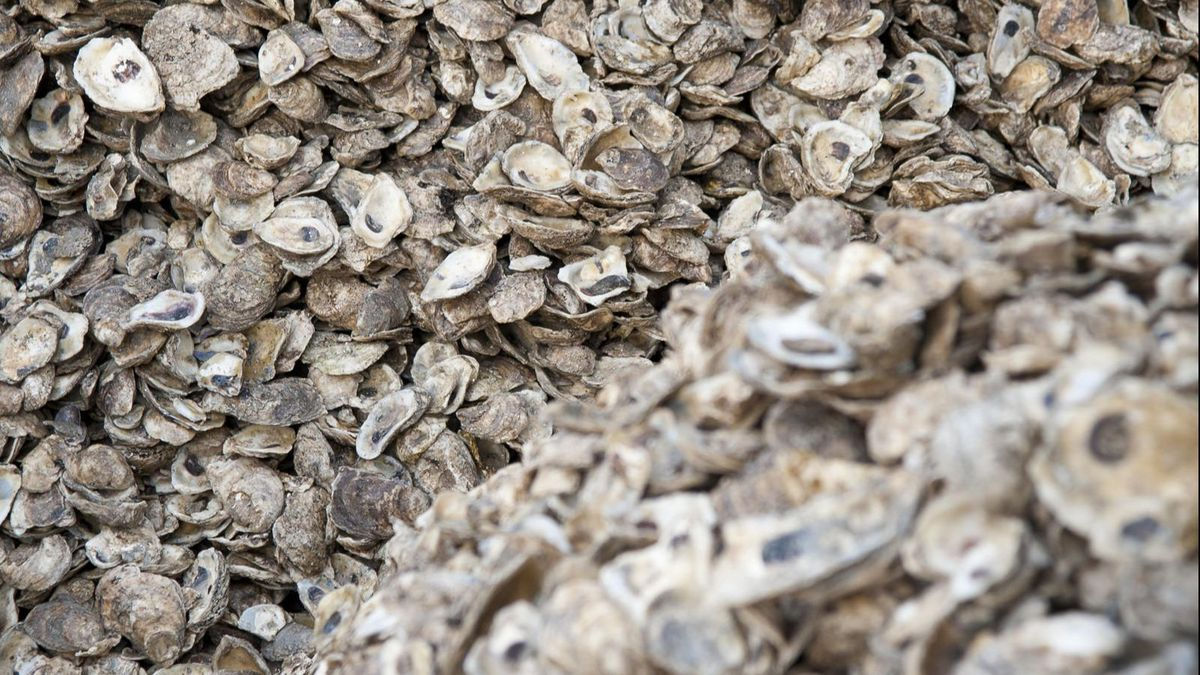 Smithsonian study finds more bad news about climate change: skimpier Chesapeake Bay oysters