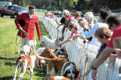 The Goshen Hounds, a Grand Prix favorite, greet spectators at Saturday's 28th annual event, held at Marama in Clarksville.