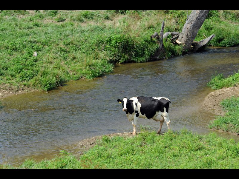Farm fencing to help the bay falling short, advocates say ...