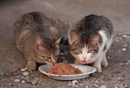 Study raises concerns about raw-food diet for pets