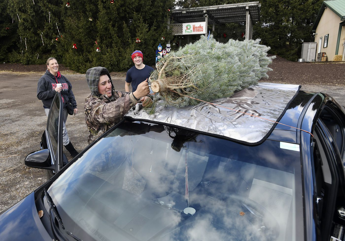 Christmas trees in Carroll County: Where to go to cut down ...