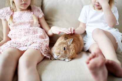 Baby bunnies quickly grow into adult rabbits, which can live 8 to 12 years.