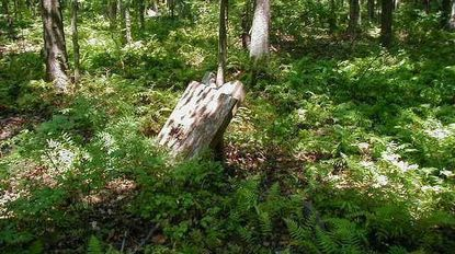 TheMaryland Environmental Trustpartnered with the Harford Land Trust to permanently protect a 104-acre woodland tract in Edgewood.