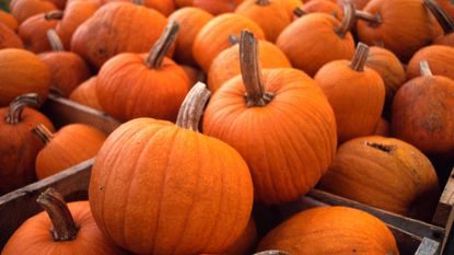 Here are eight perfectly wonderful places to celebrate the joys of autumn in the Baltimore area.
