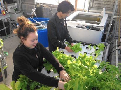 Bel Air High students Amanda Judd and Owen Boutilier harvest lettuce grown in the school's new aquaponics lab.