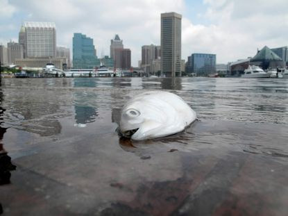 Despite foul-smelling algae bloom and fish kill in spring 2012, Baltimore harbor's water quality earned a C-minus rating, in large part because of dry weather overall for the year.
