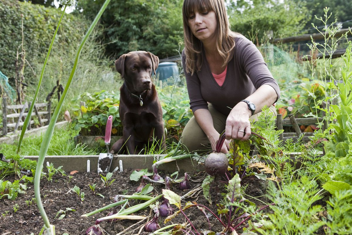 How to keep pets safe from lawn-care hazards - Baltimore Sun
