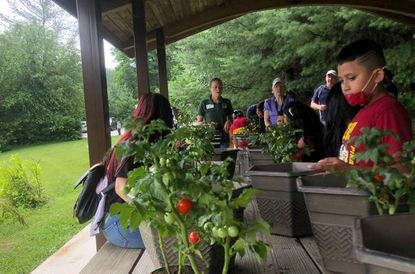"""ESOL environmental exploration summer program at Bear Branch Nature Center. Billy looks at the """"tiny treats"""" cherry tomato pots. Their activity for the day is gardening."""