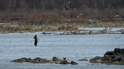 Susquehanna named one of country's 'most endangered rivers'
