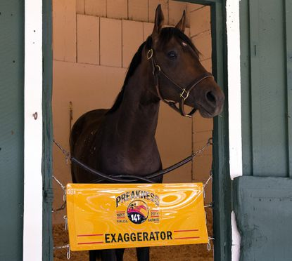 Kentucky Derby runner-up Exaggerator arrived at Pimlico Race Course at approximately 4:40 p.m. Sunday, joining Derby victor Nyquist for a rematch in Saturday's 141st Preakness Stakes. Exaggerator, who has lost four times in his career to Nyquist but was a fast-closing second in the Derby, was settled into Stall 21 in the Preakness Stakes Barn to prepare for the Middle Jewel of the Triple Crown.