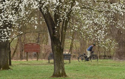 A cyclist rides by a flowering Dogwood in the Avalon Area of Patapsco Valley State Park on March 24. The park has become a popular refuge for residents looking for some open-air recreation.