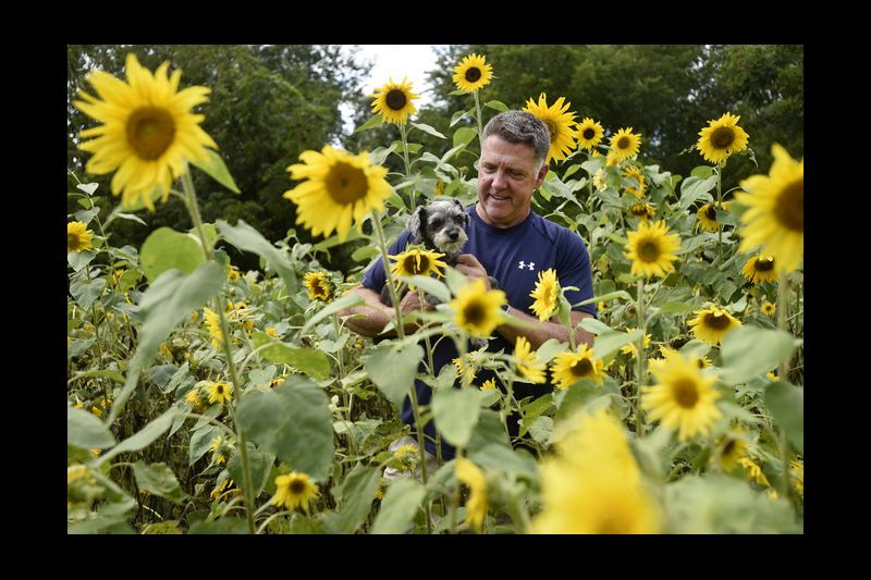 Selfies Welcome At The Sunflower Garden Carroll County Times