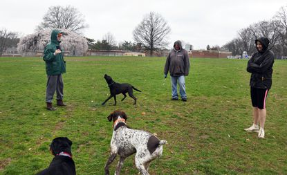 Neighbors walk their dogs in Rodgers Forge while keeping social distance. Left to right: John Buch, Bob White and Dianne Heffron. March 25, 2020