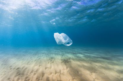 A plastic bags in the ocean threaten sea life, as they can be mistaken for food or strangle dolphins and turtles.