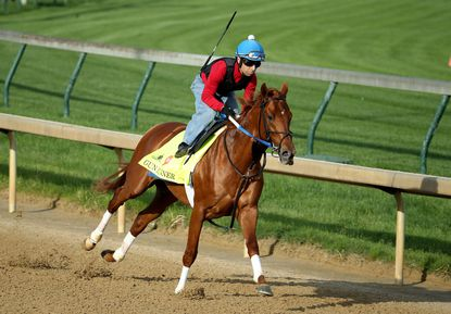 Gun Runner runs on the track during the morning training for the 2016 Kentucky Derby at Churchill Downs on May 02, 2016 in Louisville, Kentucky. The horse will not compete in the Preakness.