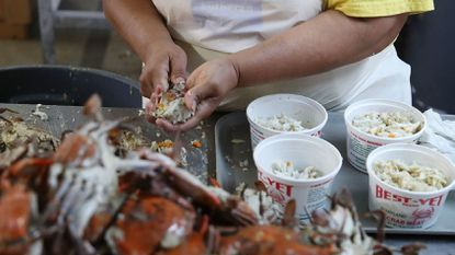 A woman picks crabs at the W.T. Ruark Seafood Co., on May 17, in Hoopers Island. Due to a new lottery system this year several seafood companies failed to get temporary H-2B visas for their workforce that has been coming to the eastern shore to pick crab meat.