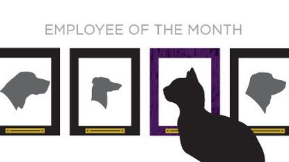 """Trent Kittleman's book, """"Why Must There Be Dragons? Empowering Women to Master Their Careers Without Changing Men,"""" uses cats and dogs as characters to illustrate how women and men communicate differently in the workplace."""