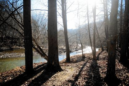 Patapsco River in Patapsco Valley State Park