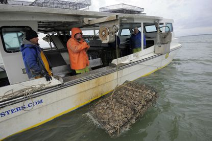 Left to right, Hector Meduena and Kevin Covey, of Chesapeake Gold Oysters, return an oyster cage to Tar Bay.