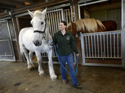 Gentle Giants Draft Horse Rescue to expand with help of memorial gift