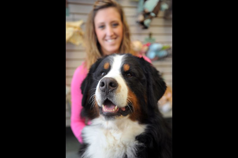 Bel Air Dog Wins Big At Westminster Show Baltimore Sun