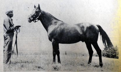 The horse Saggy, during his stud days, was photographed with Gene Fisher, his groom at Country Life Farm in Bel Air. Mr. Fisher, who died in 2000, worked around horses 40 years and loved them, according to his obituary.