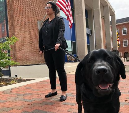 Sata, an electronic storage detecting dog, was welcomed to the Harford County Sheriff's Office Thursday. Sata will work as a therapy dog and detecting storage devices housing child pornography.