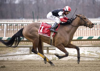 Royale Michele ridden by Geovany Garcia wins the $150,000 Barbara Fritchie Handicap (Grade 2) for fillies and mares at Laurel Park in Maryland on Saturday, February 14, 2009.