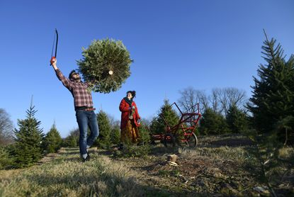 Justin Lee Radford of Baltimore raises his arms in triumph as his wife Kate Weinberg looks on after felling their Christmas tree at Hirt Tree Farm in Westminster Thursday, Dec. 10, 2020. Tree farms in Carroll are seeing big weekend crowds and high demand for trees this year.