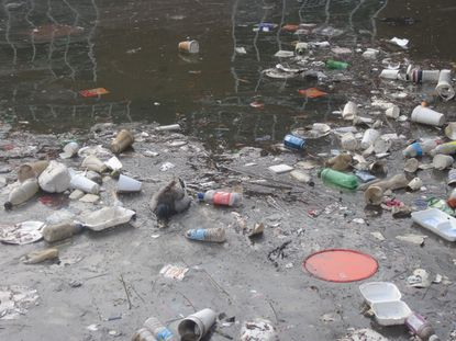 Duck swims through foam, bottles and other debris along Fells Point/Canton waterfront.