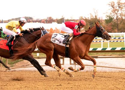 Big Bertha Stable's Taco Supream, right, secured a three-quarter-length victory in Saturday's $100,000 Maryland Million Sprint at Laurel Park.