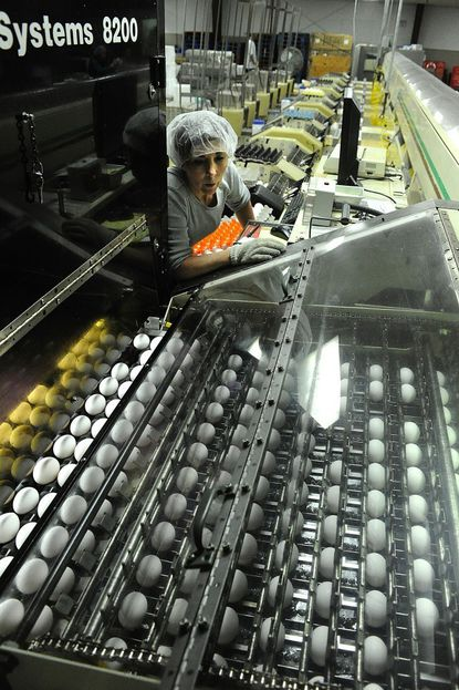 Nancy Pauley inspects the machine that sorts the eggs by size at Sauder's Eggs in Hampstead.