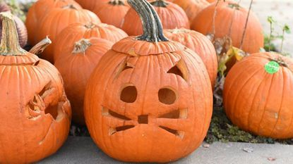 According to Zillow's Trick-or-Treat Index, which ranks the 20 best cities to trick or treat in the nation, Charm City is sixth best.