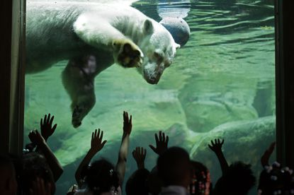Free Fall Baltimore kicks off its 10th season with free admission to the Maryland Zoo in Baltimore on Thursday.