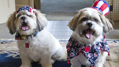 Summer can be a noisy and stressful time for our pets — even those decked out in red, white and blue for the 4th of July.