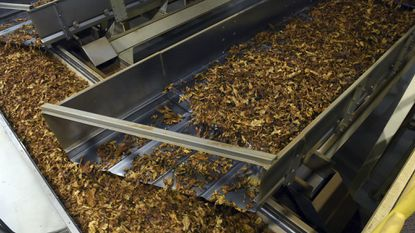 In this Dec. 1, 2016, file photo, processed tobacco heads down the line at a tobacco company in Danville, Virginia.