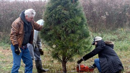 A guide to finding a Christmas tree in the Baltimore area