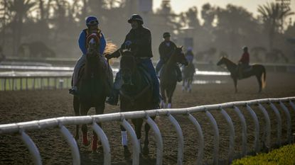 Horses work out on the main track at Santa Anita on March 13. The facility has been closed for racing since March 5 following a dramatic increase in the number of horse fatalities.