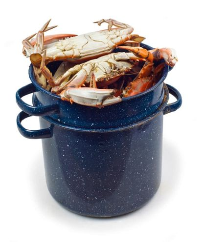 Chesapeake Bay blue crabs that have been steamed sit in their steaming pot.