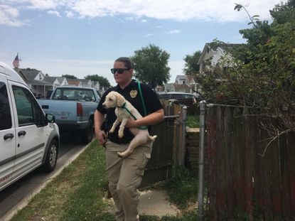 Baltimore County agencies bust Dundalk puppy mill, impound 14 dogs