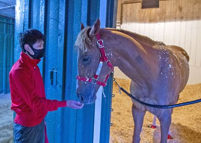 France Go de Ina arrived at Pimlico Race Course on Saturday night to prepare for the 146th running of the Preakness Stakes on May 15.