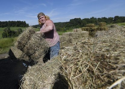 Ryan Ashe of Lineboro loads bales of hay at the Westminster Hay Auction Monday, Sept. 20, 2021. Monday's auction would be the final hay auction of Tasto's Auction Service, administered by Dixie Tasto, wife of the late Nevin Tasto, a longtime Carroll auctioneer who died earlier this year.