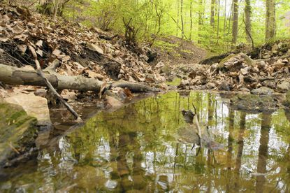 Towson Run, which is located near the Towson YMCA, is among eight local streams that the Green Towson Alliance will clean up in April.