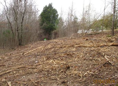 This photo, taken by Abingdon resident Susan Beckwell Dec. 4 while walking through the wooded area slated for the Abingdon Business Park warehouse development, shows a part of the site where Beckwell says trees have been cleared.