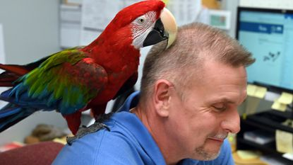 Chessie is a 19-year-old green wing macaw who lives at Chesaco RV in Joppa. Her main caretaker there is Don Olmstead, who is the parts manager. Chessie is a frequent visitor to Don's office, where she often sits on his shoulder while he works at his desk.