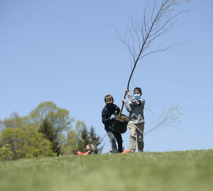 Hampstead Elementary School fourth graders Evan Hutchins, left, and Aahid Basnet carry a river birch, one of the 20 trees their Ecosystem class planted at the school to mark Earth Day, a day late due to cold weather and snow flurries, Friday, April 23, 2021.