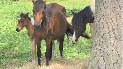 Szymanski: Taking in an orphan pony shows us all the natural beauty of adoption