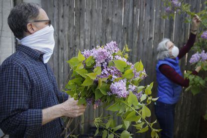 Vincent Lisi, left, holds lilacs as his wife Kimberly prunes more to donate to the funeral of Winifred Pardo, a 91-year-old woman who died last month in New York. When her family could not attend her funeral because of the coronavirus, a Brooklyn funeral director turned to people in Pardo's neighborhood for help, and people responded.