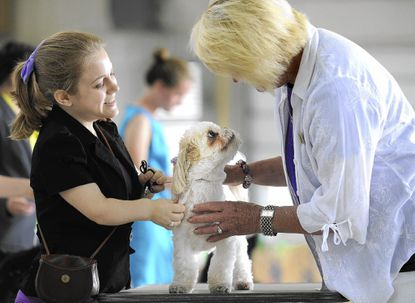Child, teen handlers place in 4-H dog show; head to state fair