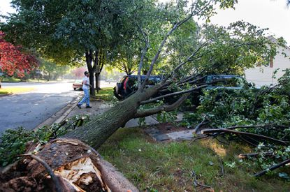 Bill McGruder's Toyota Rav4 and his Honda CRV were damaged by the tree knocked over by Friday night's violent thunderstorms.